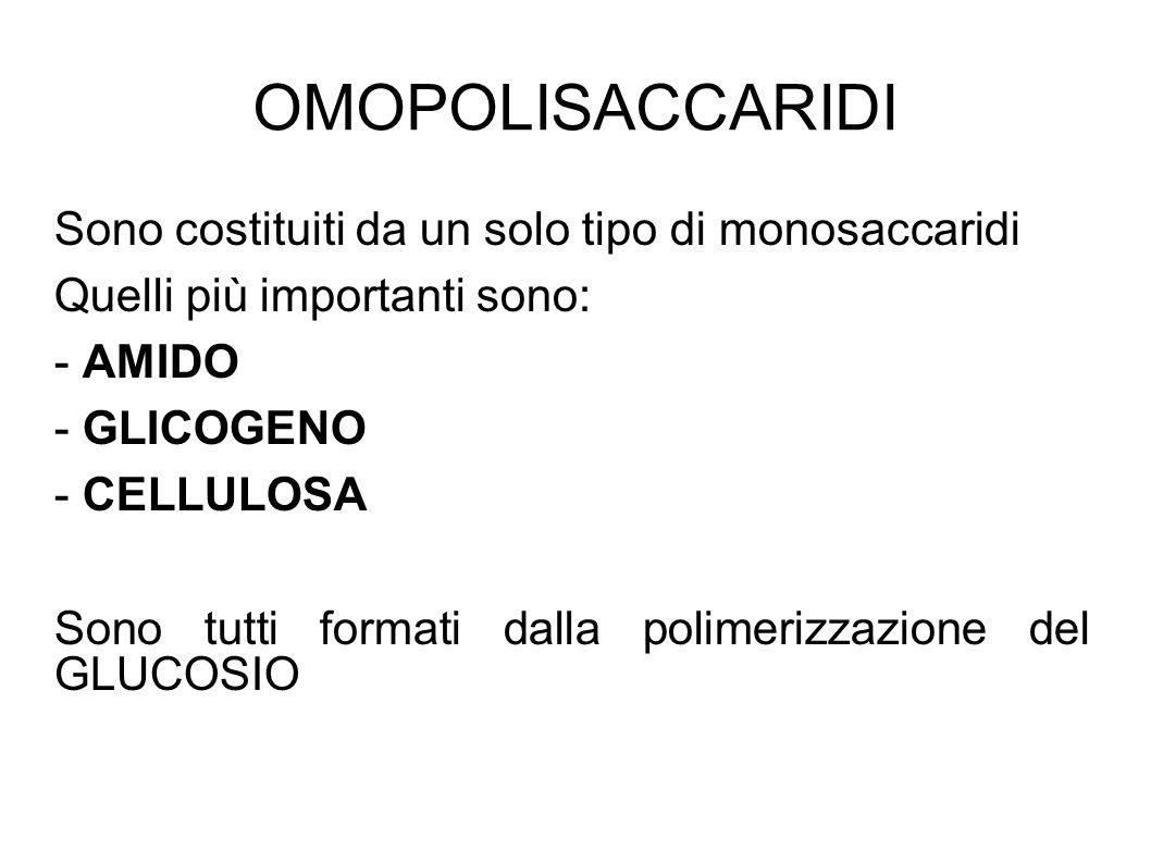 OMOPOLISACCARIDI Sono costituiti da un solo tipo di monosaccaridi