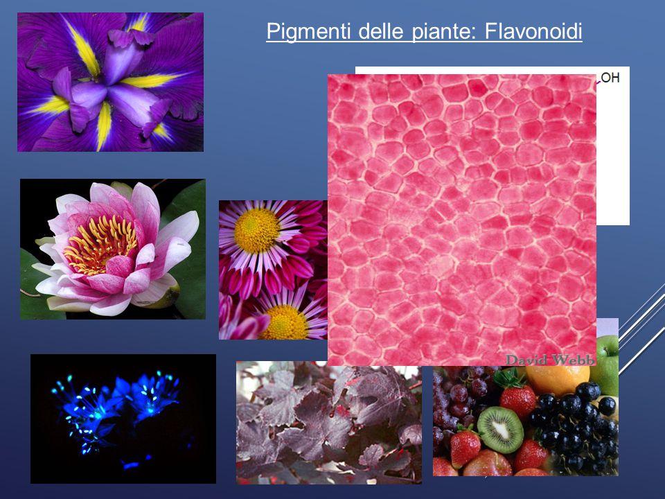 Pigmenti delle piante: Flavonoidi