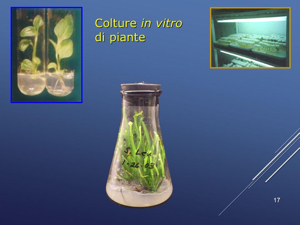 Colture in vitro di piante 17