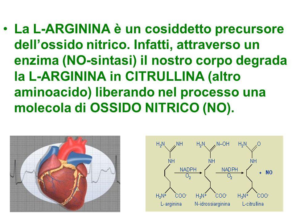 La L-ARGININA è un cosiddetto precursore dell'ossido nitrico