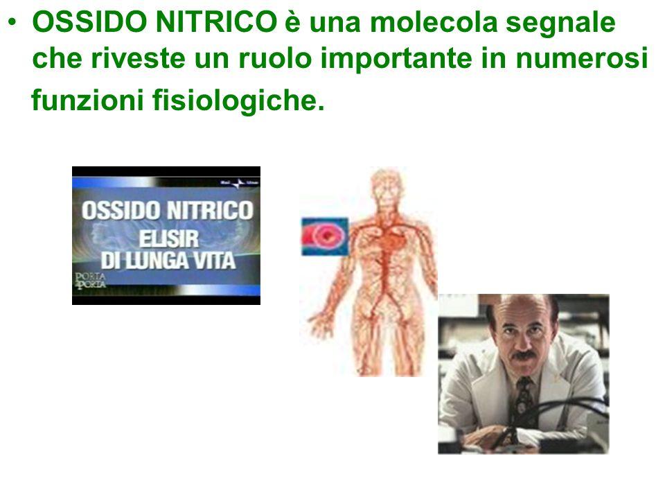 OSSIDO NITRICO è una molecola segnale che riveste un ruolo importante in numerosi