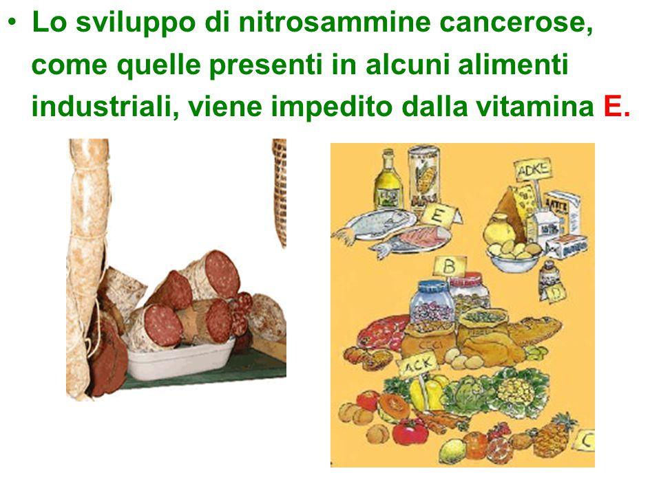 Lo sviluppo di nitrosammine cancerose,