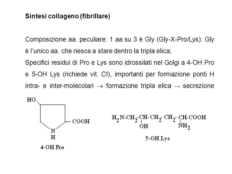 Pro/Lys + O2 + -KGA HO-Pro/Lys + CO2 + succinato