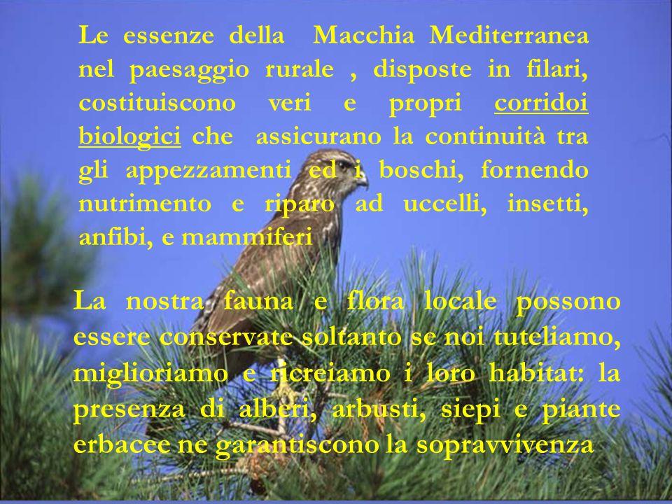Le essenze della Macchia Mediterranea nel paesaggio rurale , disposte in filari, costituiscono veri e propri corridoi biologici che assicurano la continuità tra gli appezzamenti ed i boschi, fornendo nutrimento e riparo ad uccelli, insetti, anfibi, e mammiferi