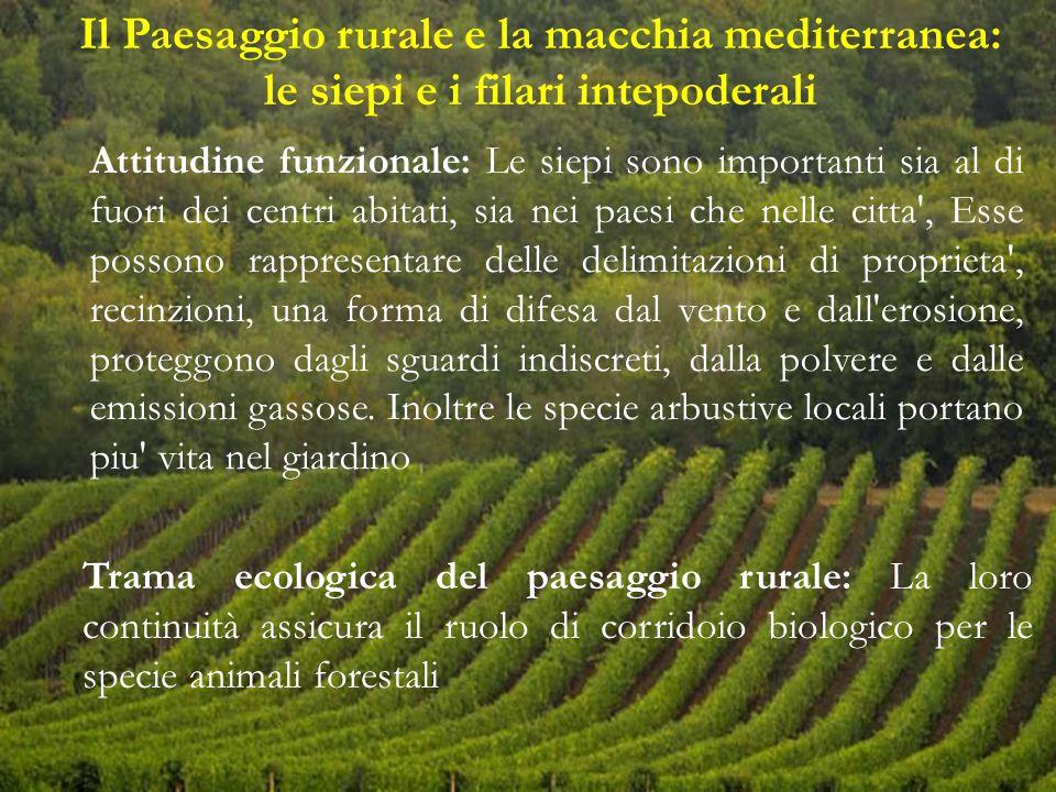 Il Paesaggio rurale e la macchia mediterranea: le siepi e i filari intepoderali