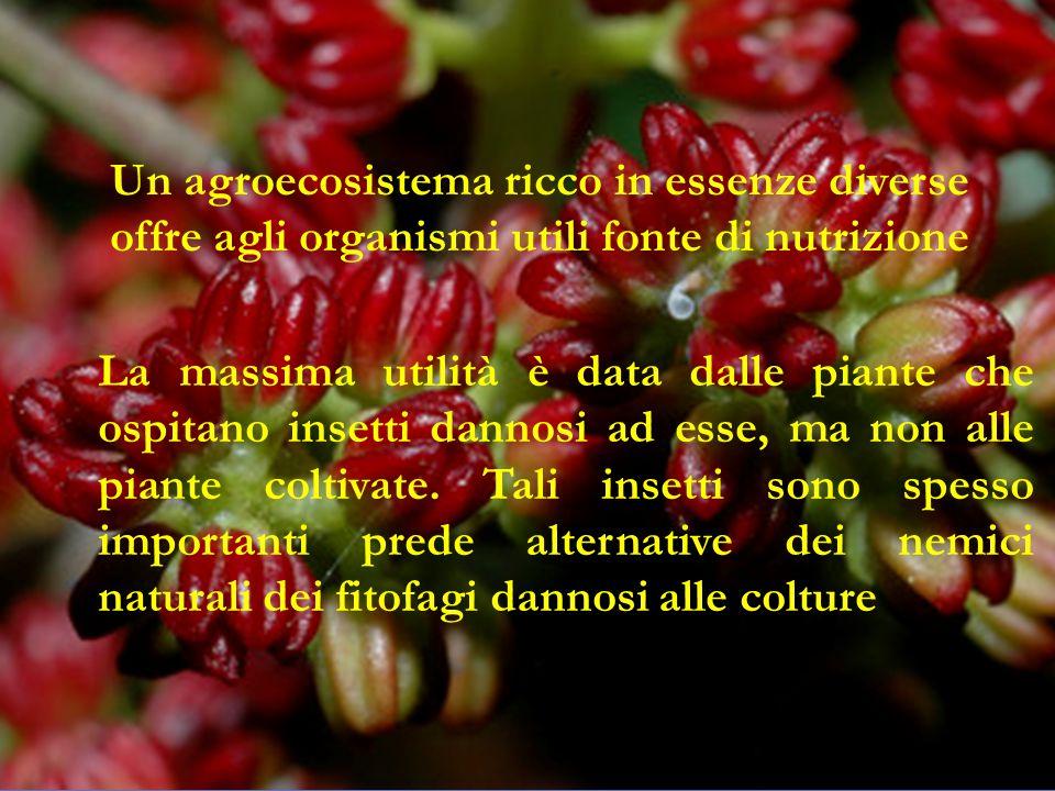 Un agroecosistema ricco in essenze diverse offre agli organismi utili fonte di nutrizione
