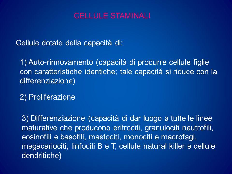CELLULE STAMINALI Cellule dotate della capacità di: