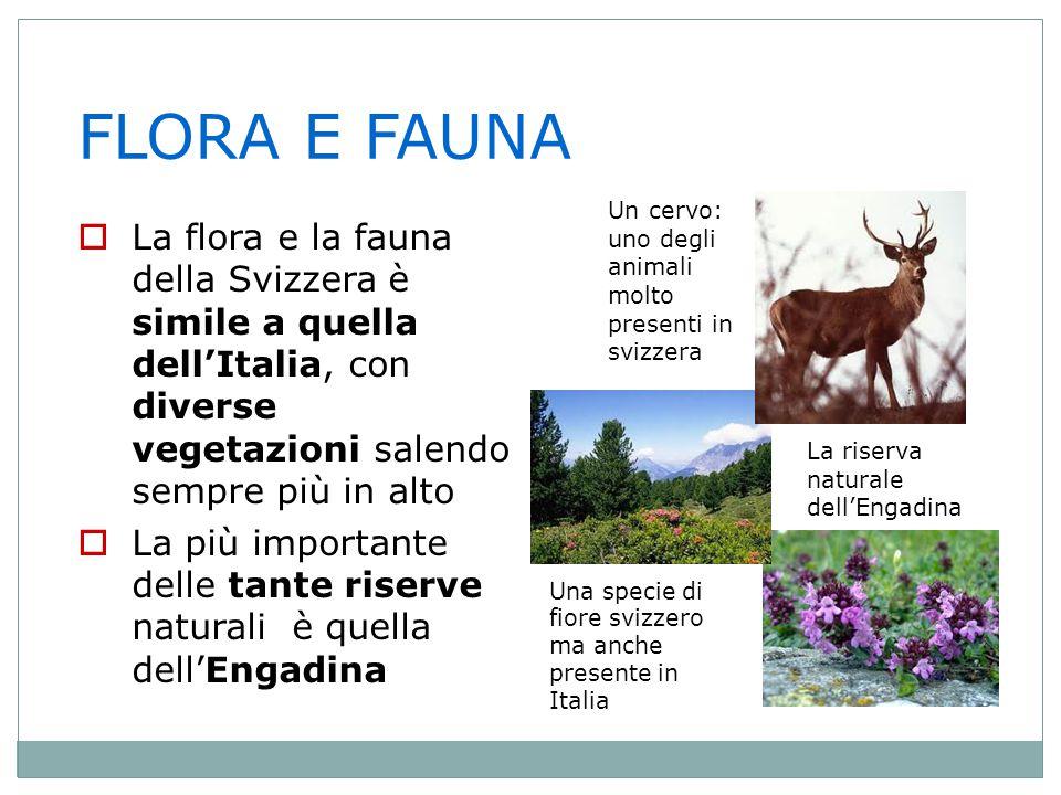 FLORA E FAUNA Un cervo: uno degli animali molto presenti in svizzera.