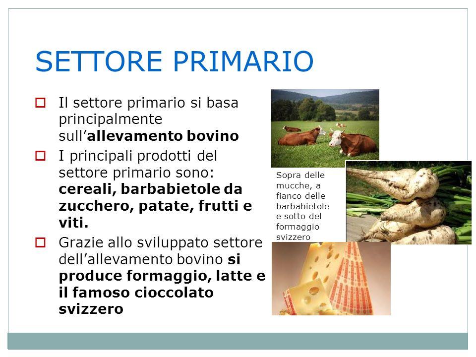 SETTORE PRIMARIO Il settore primario si basa principalmente sull'allevamento bovino.