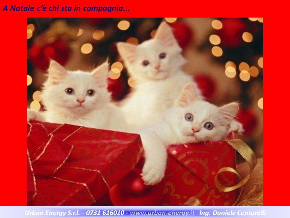 A Natale c'è chi sta in compagnia...