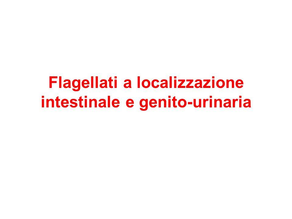 Flagellati a localizzazione intestinale e genito-urinaria