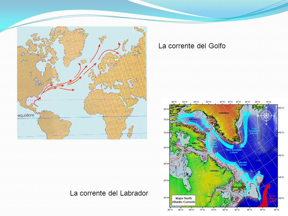 La corrente del Labrador