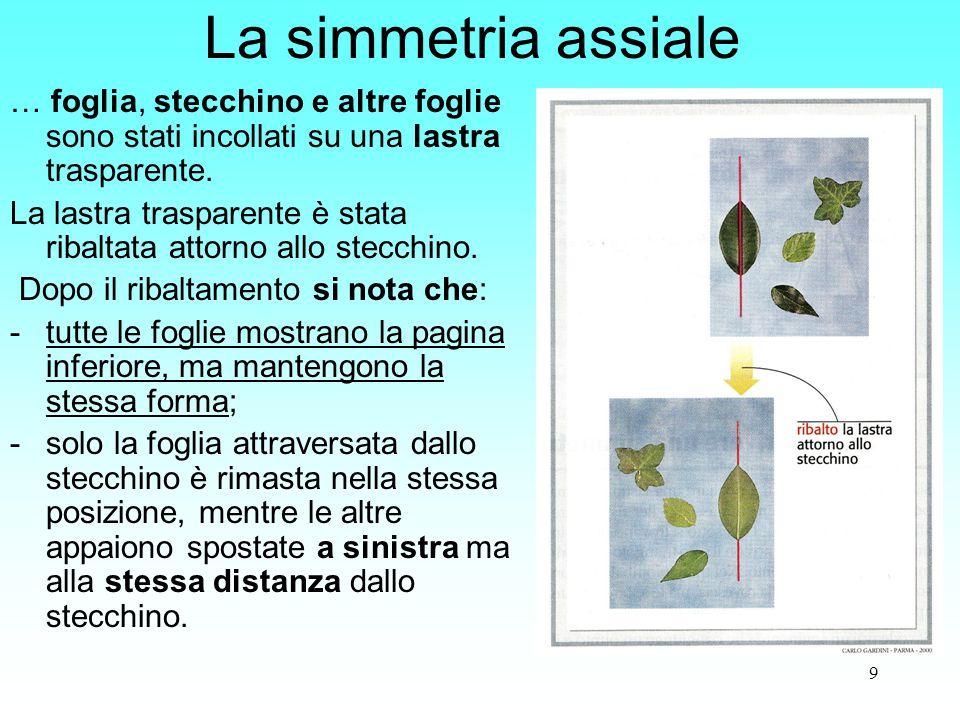 La simmetria assiale … foglia, stecchino e altre foglie sono stati incollati su una lastra trasparente.