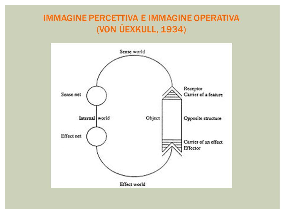IMMAGINE PERCETTIVA E IMMAGINE OPERATIVA