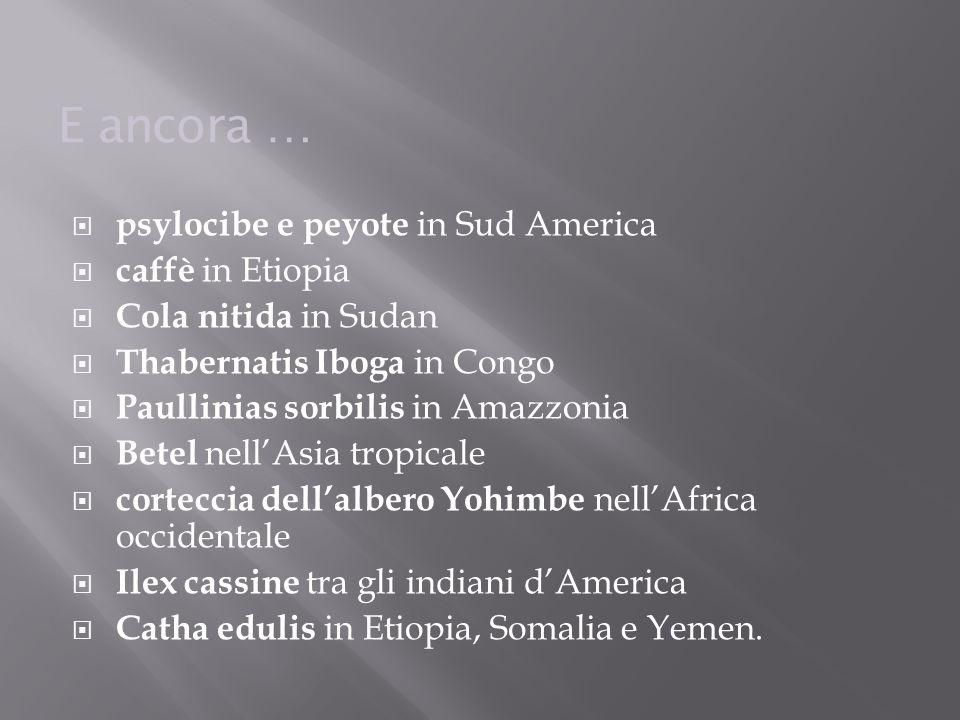 E ancora … psylocibe e peyote in Sud America caffè in Etiopia