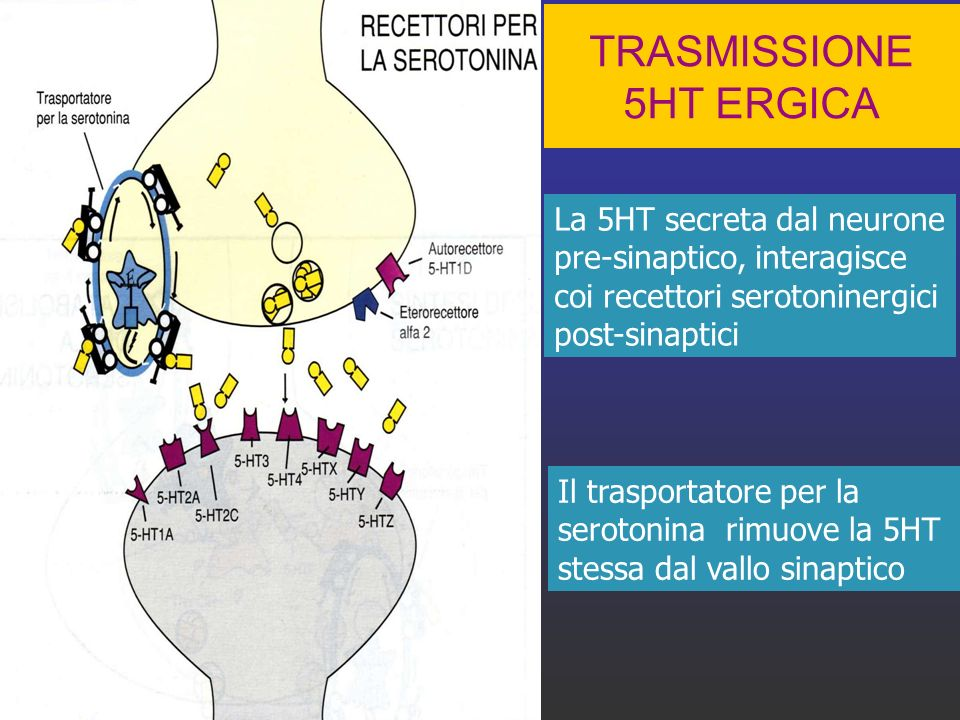 TRASMISSIONE 5HT ERGICA