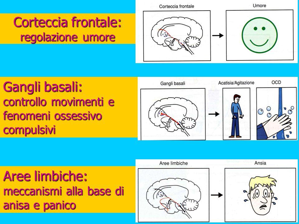 Corteccia frontale: regolazione umore