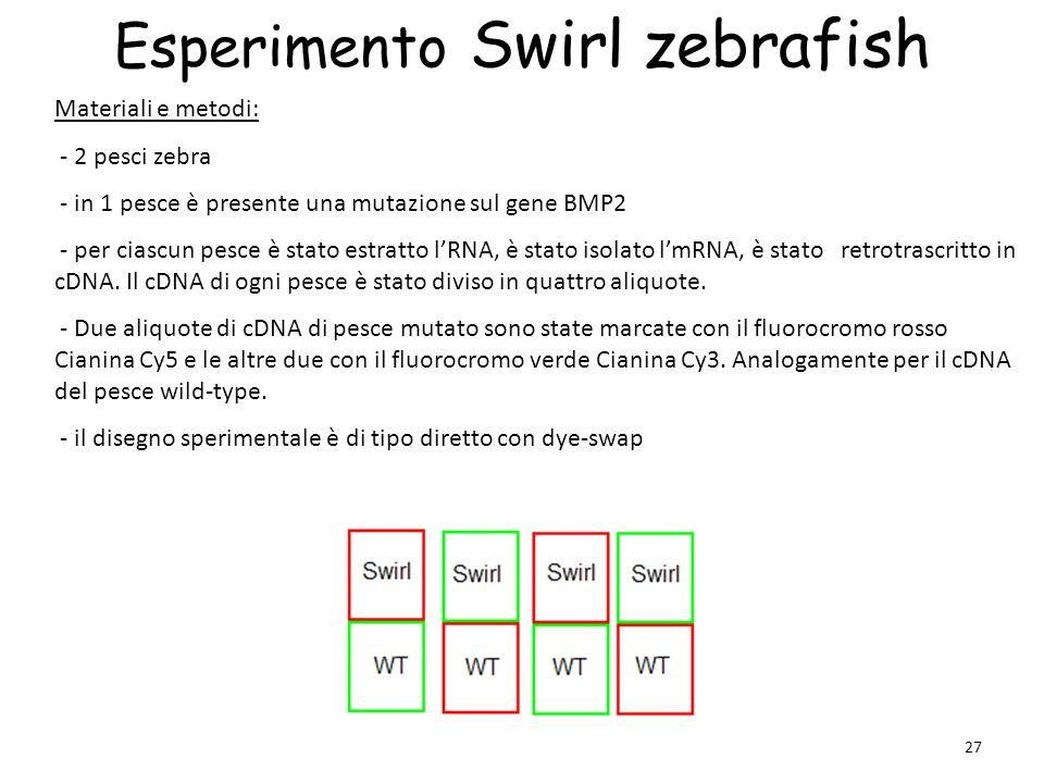 Esperimento Swirl zebrafish
