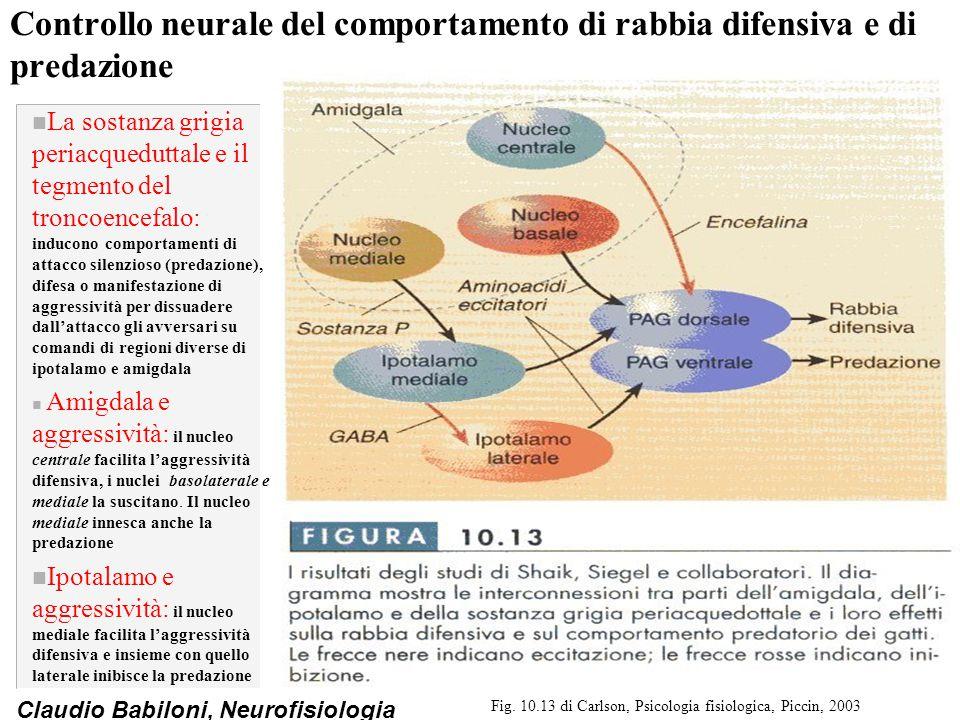 Fig. 10.13 di Carlson, Psicologia fisiologica, Piccin, 2003