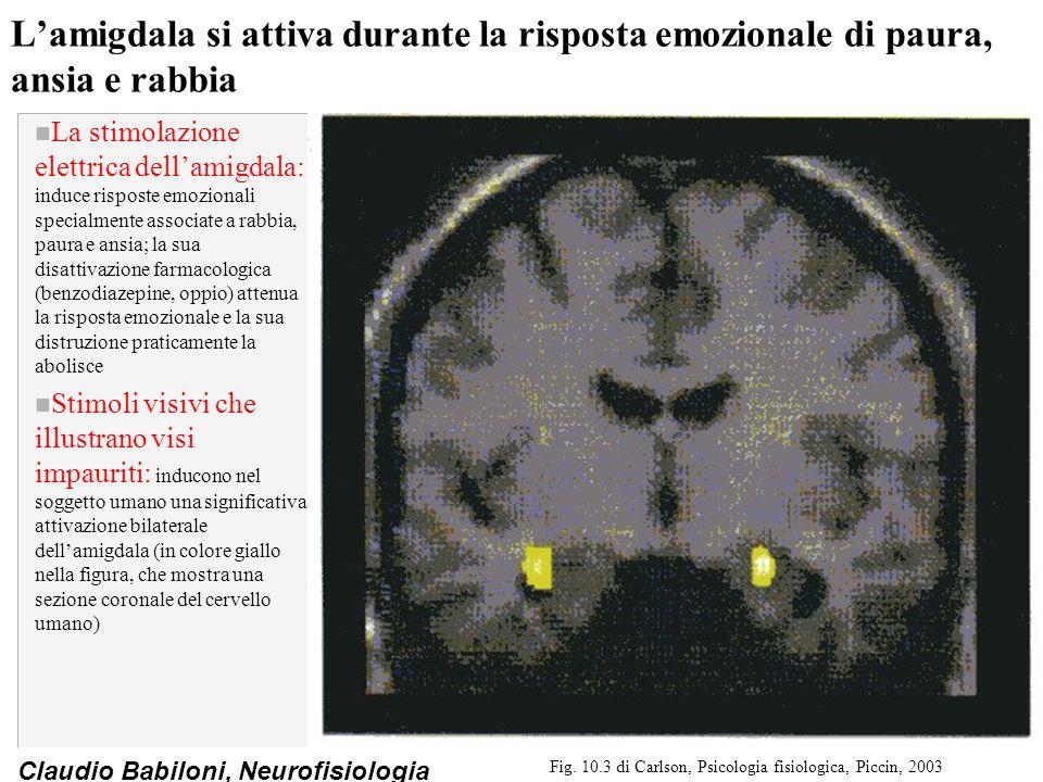 Fig. 10.3 di Carlson, Psicologia fisiologica, Piccin, 2003
