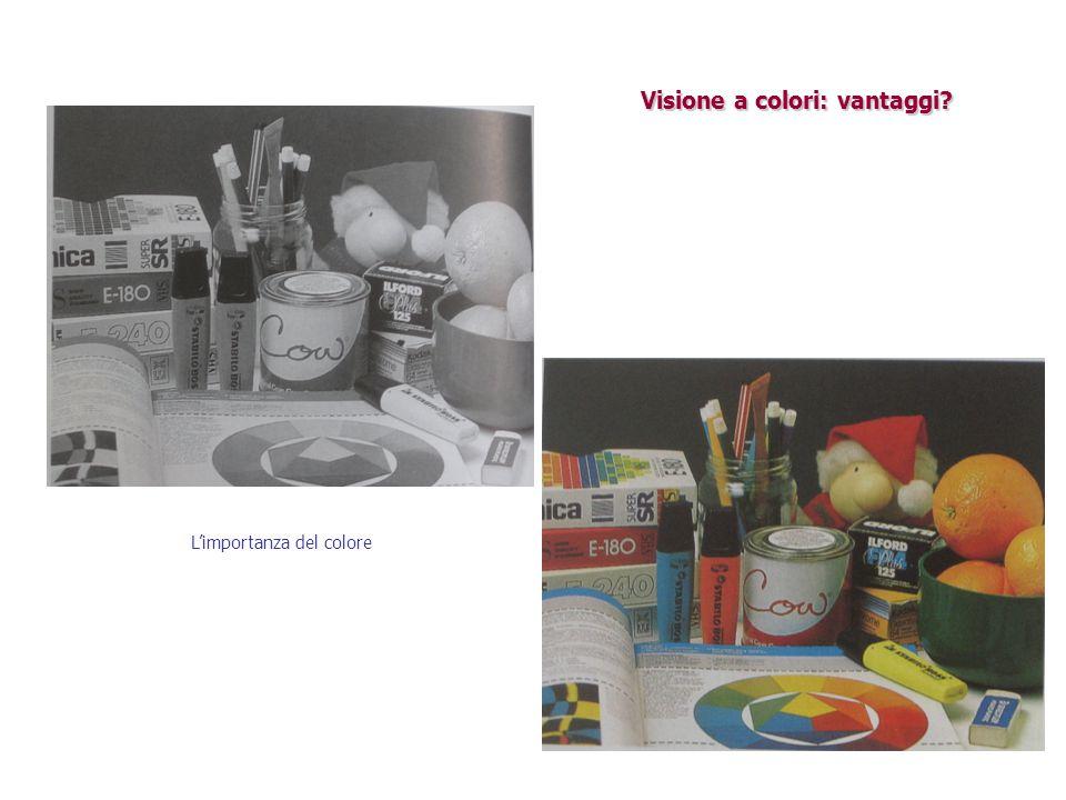 Visione a colori: vantaggi