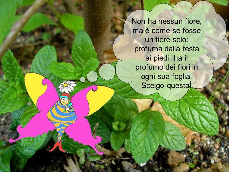 Non ha nessun fiore, ma è come se fosse un fiore solo: profuma dalla testa ai piedi, ha il profumo dei fiori in ogni sua foglia.