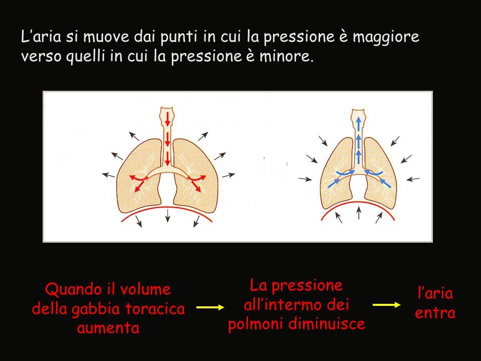 La pressione all'intermo dei polmoni diminuisce