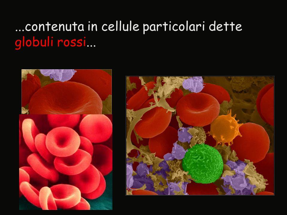 ...contenuta in cellule particolari dette globuli rossi...