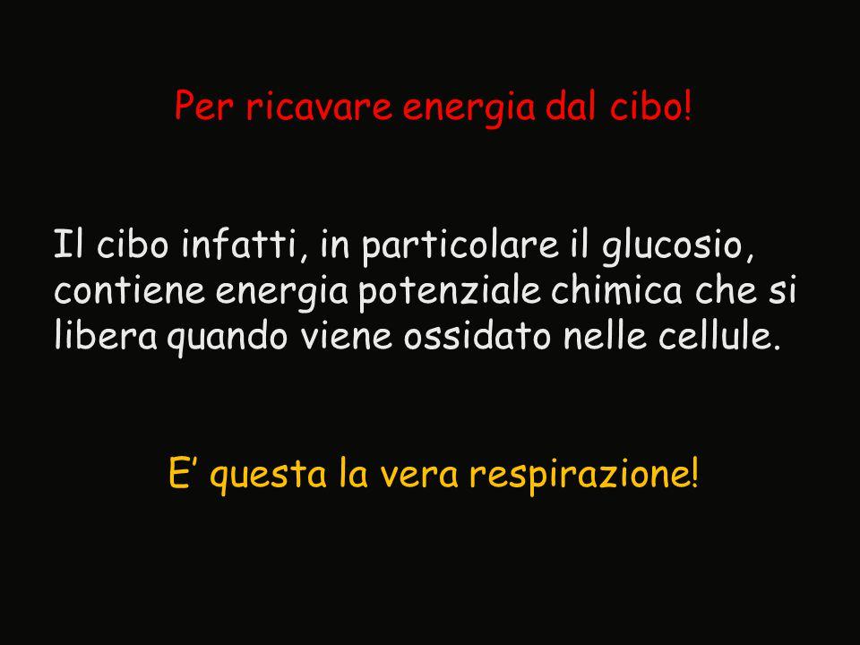 Per ricavare energia dal cibo!