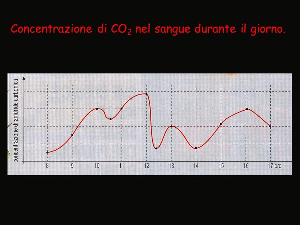 Concentrazione di CO2 nel sangue durante il giorno.