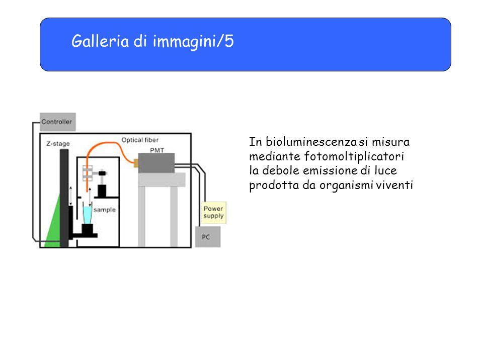Galleria di immagini/5 In bioluminescenza si misura mediante fotomoltiplicatori.