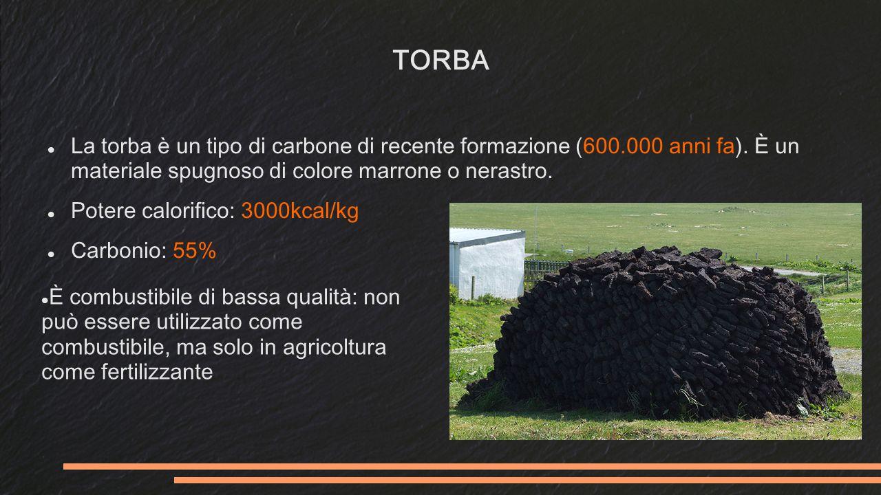 TORBA La torba è un tipo di carbone di recente formazione (600.000 anni fa). È un materiale spugnoso di colore marrone o nerastro.