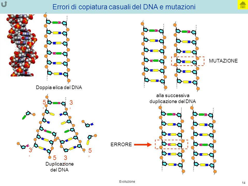 Errori di copiatura casuali del DNA e mutazioni