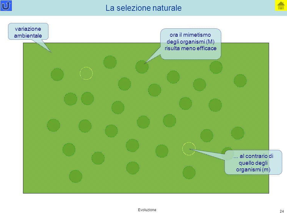 La selezione naturale variazione ambientale