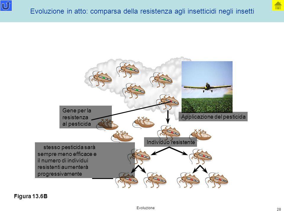 Evoluzione in atto: comparsa della resistenza agli insetticidi negli insetti