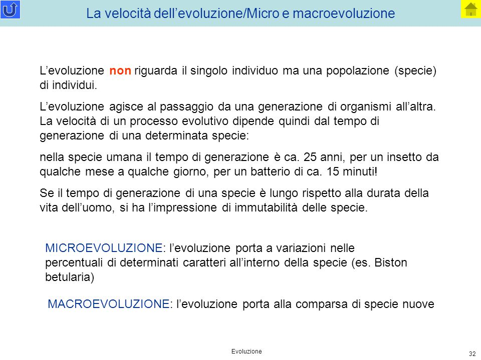 La velocità dell'evoluzione/Micro e macroevoluzione