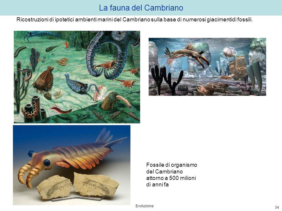 La fauna del Cambriano Ricostruzioni di ipotetici ambienti marini del Cambriano sulla base di numerosi giacimentidi fossili.