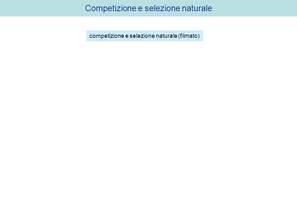 Competizione e selezione naturale