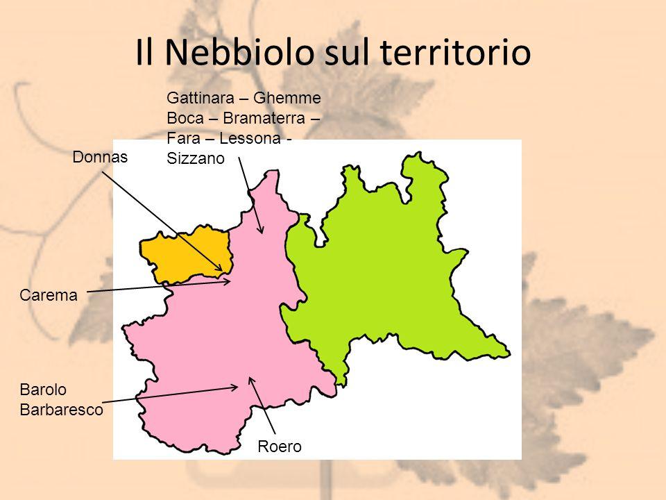 Il Nebbiolo sul territorio