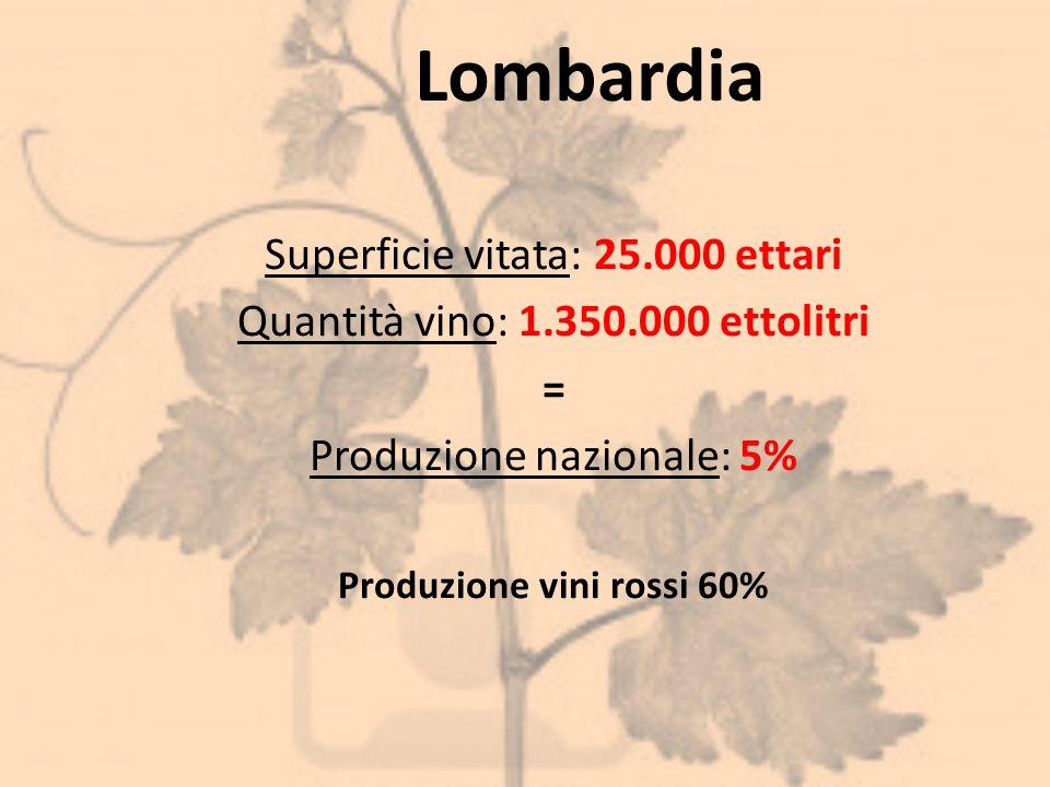 Produzione vini rossi 60%