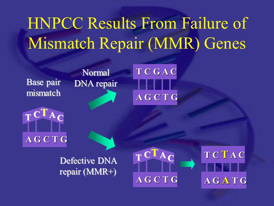 HNPCC Results From Failure of Mismatch Repair (MMR) Genes