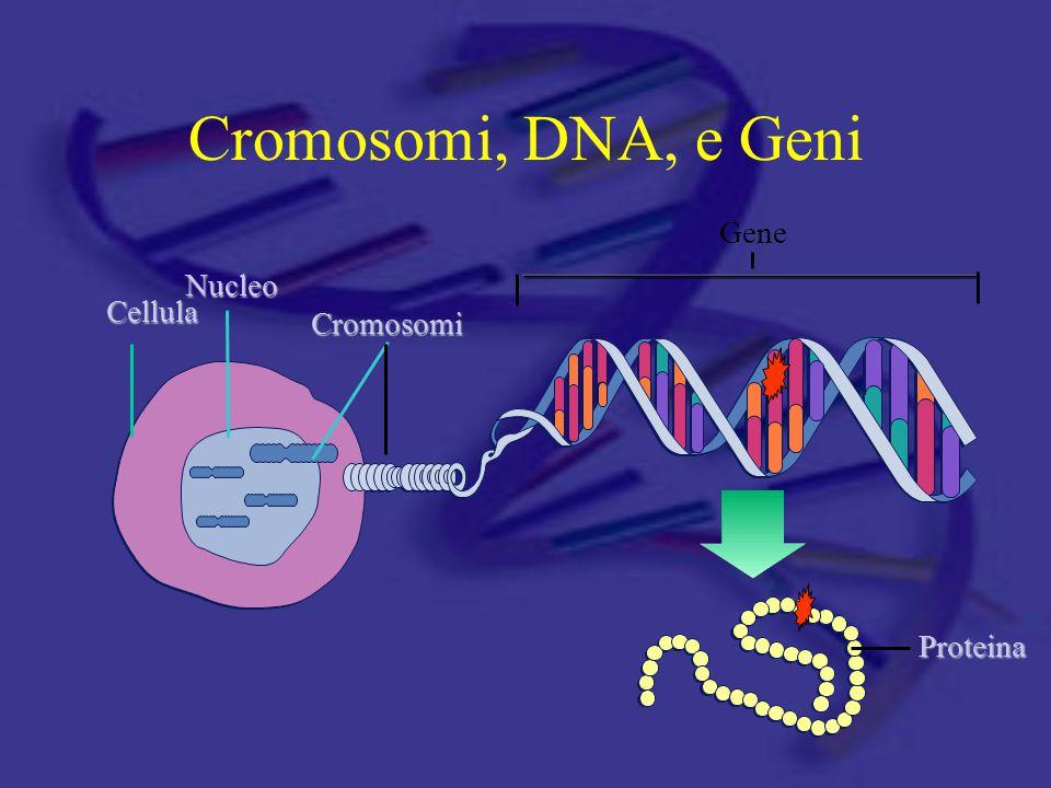 Cromosomi, DNA, e Geni Gene Nucleo Cellula Cromosomi Proteina