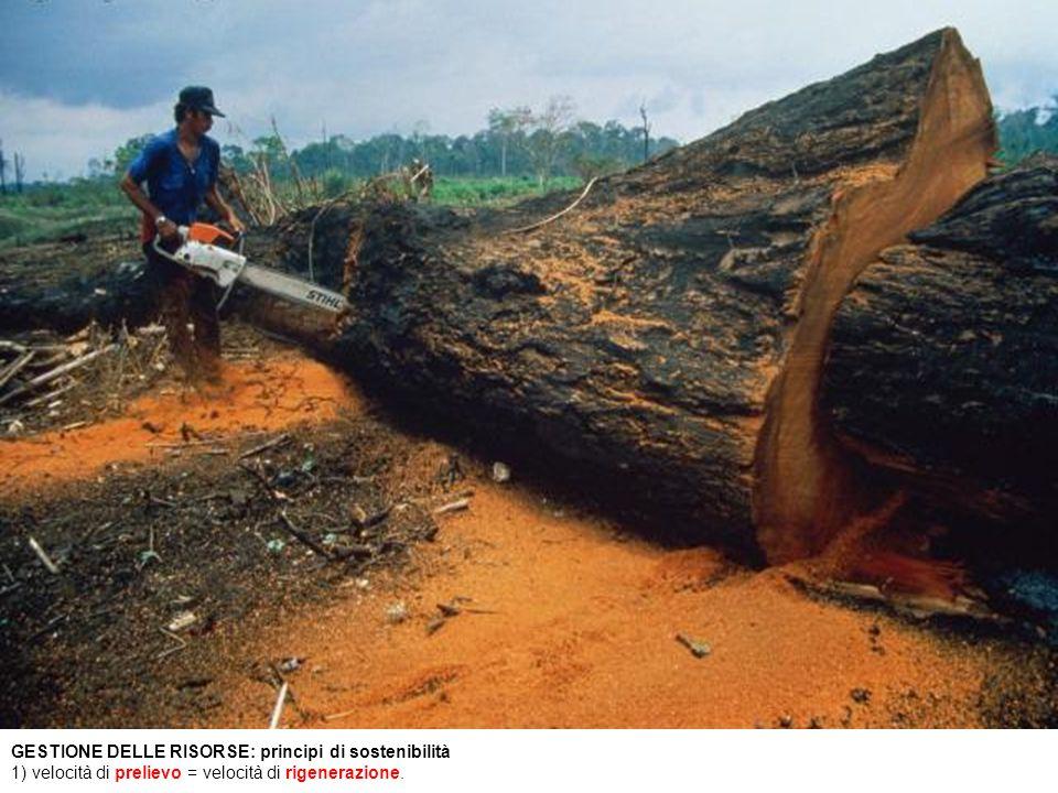 GESTIONE DELLE RISORSE: principi di sostenibilità