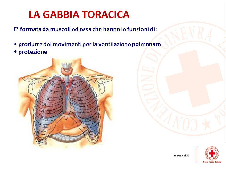 LA GABBIA TORACICA E' formata da muscoli ed ossa che hanno le funzioni di: • produrre dei movimenti per la ventilazione polmonare.