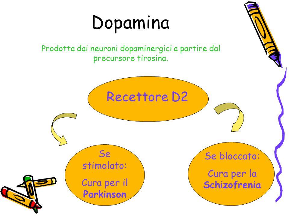 Dopamina Recettore D2 Se stimolato: Se bloccato: