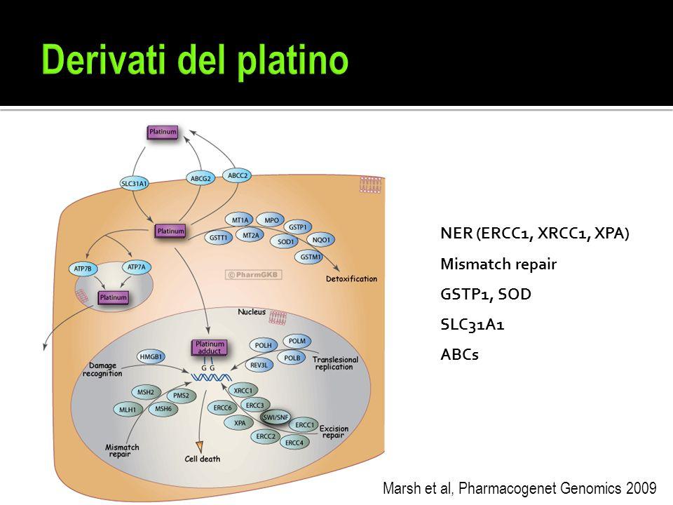 Derivati del platino NER (ERCC1, XRCC1, XPA) Mismatch repair