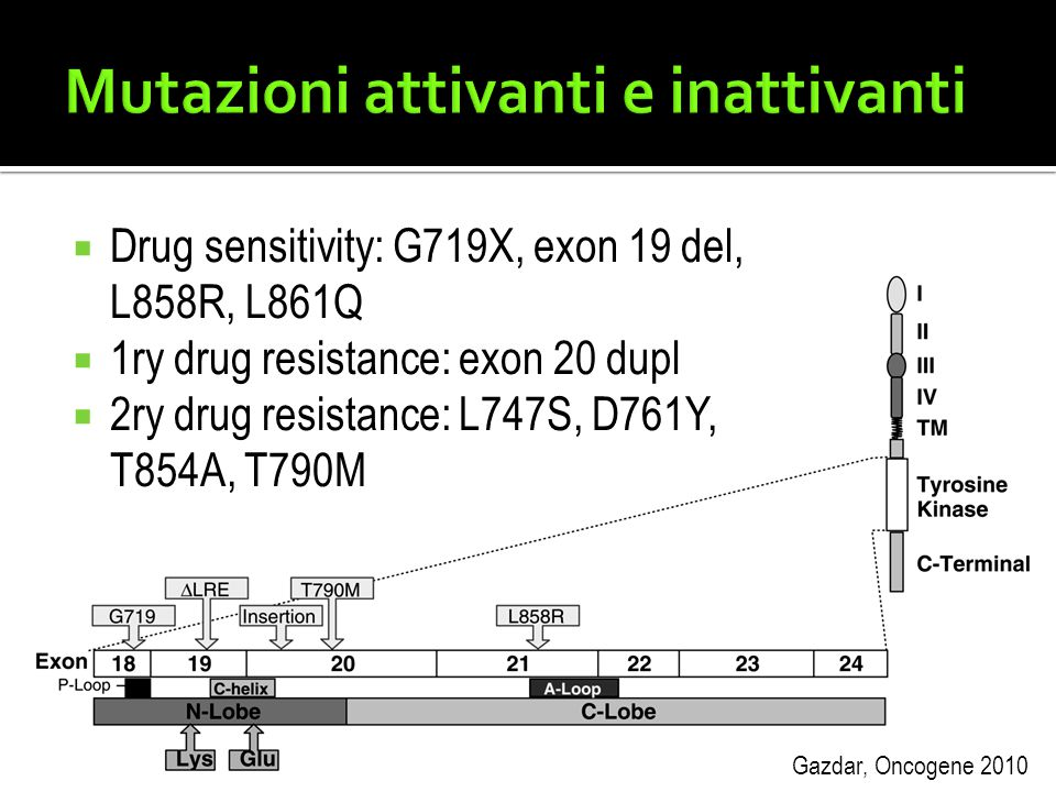 Mutazioni attivanti e inattivanti