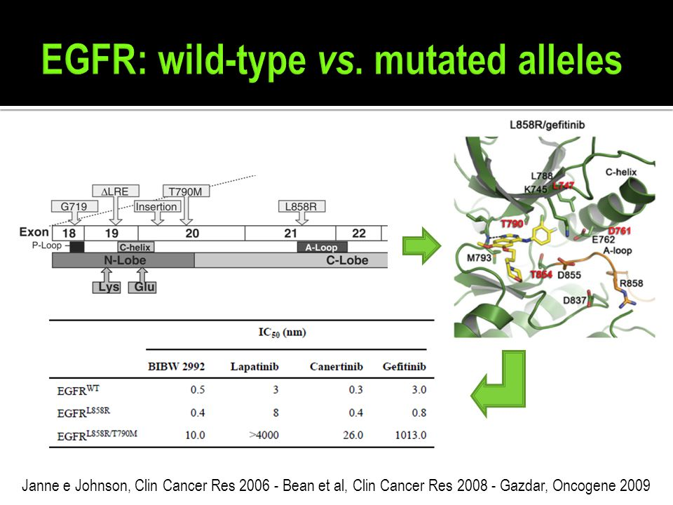 EGFR: wild-type vs. mutated alleles