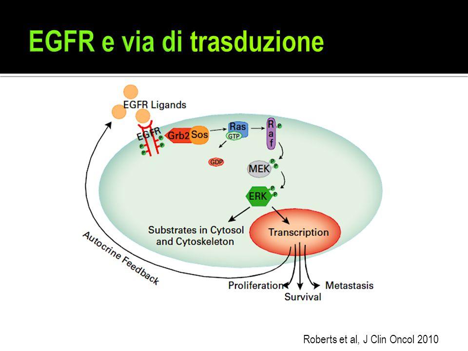 EGFR e via di trasduzione