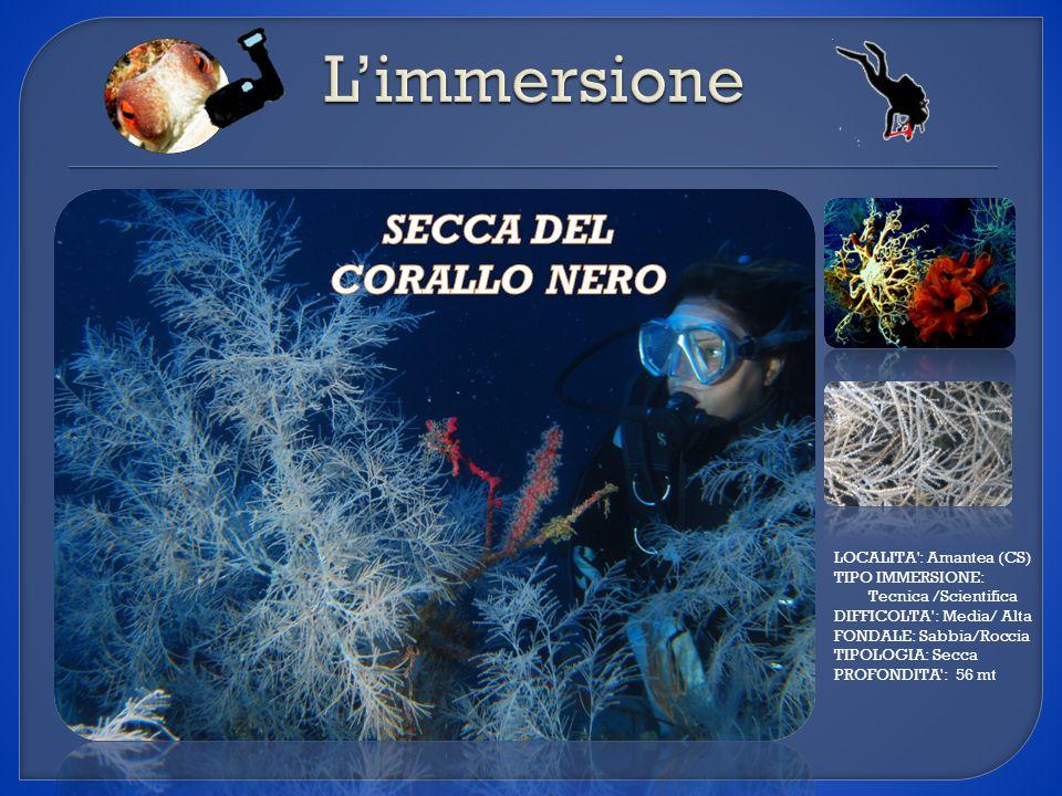 L'immersione SECCA DEL CORALLO NERO LOCALITA : Amantea (CS)